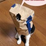 zoe_the_cat